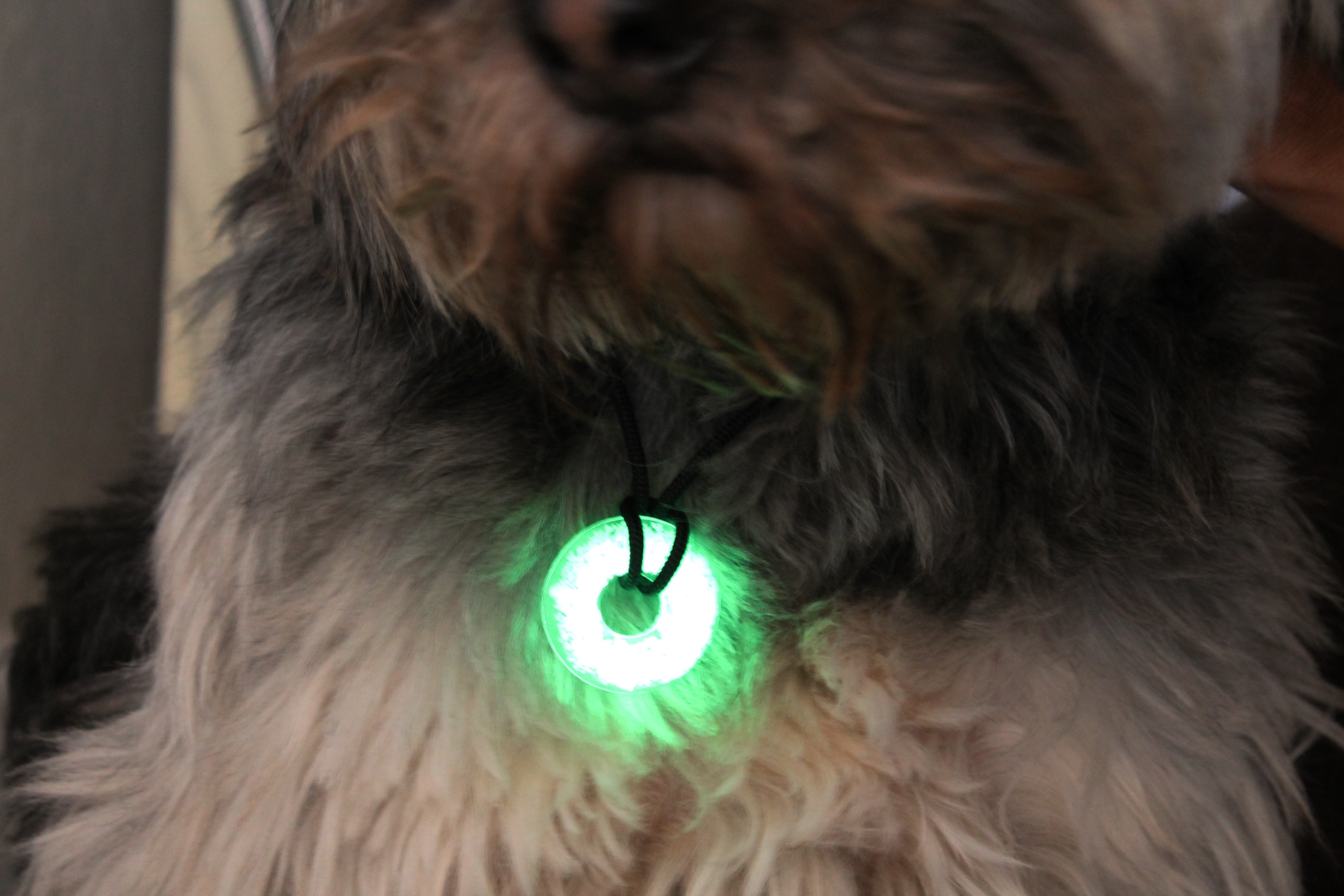 UV Paqlite Dog Glow